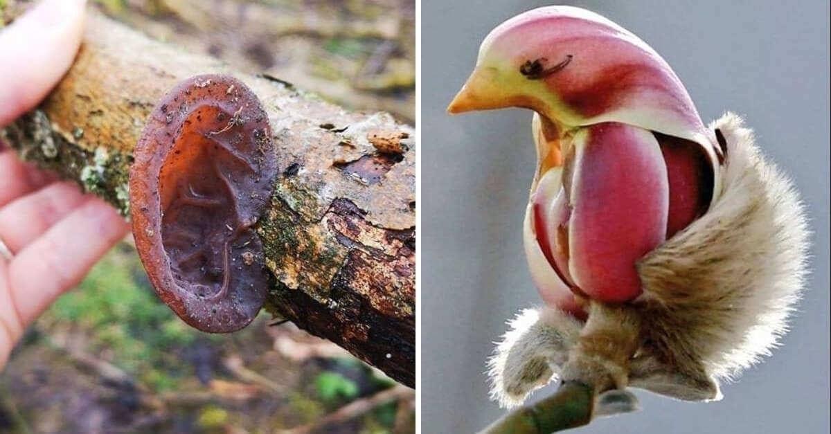 17 immagini che dimostrano quanto possa essere confusa la natura