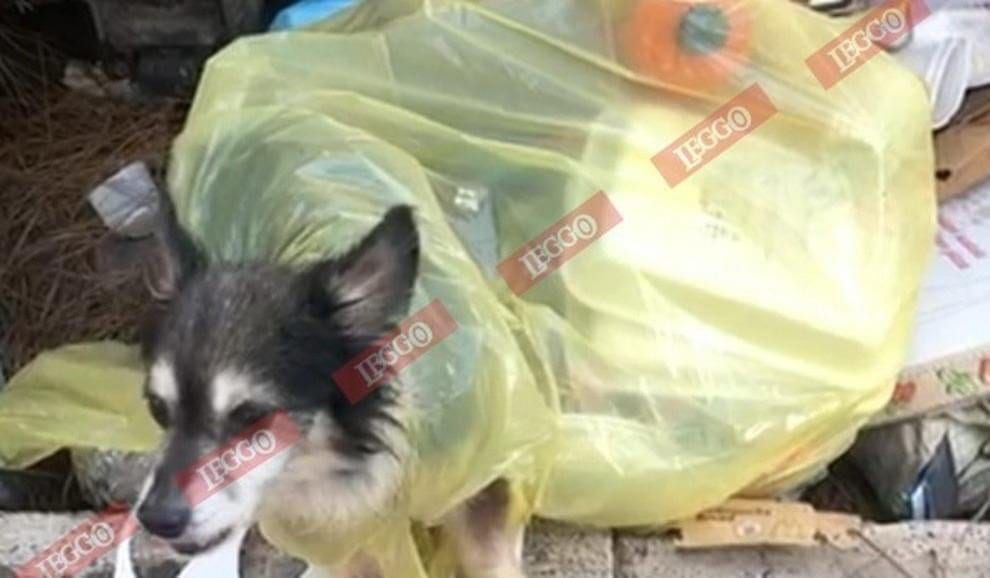 Roma, cane abbandonato in un sacco della spazzatura salvato dai carabinieri VIDEO