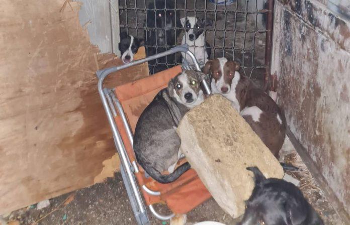 incendio cuccioli cani salvati storia commovente